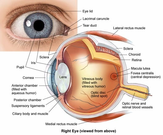 Anatomy of the Eye - Columbia Eye Clinic